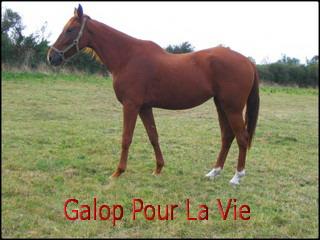 SCHTROUMFETTE - TF née en 2006 - adoptée en novembre 2009 par Delphine  35309Schoutromphette4