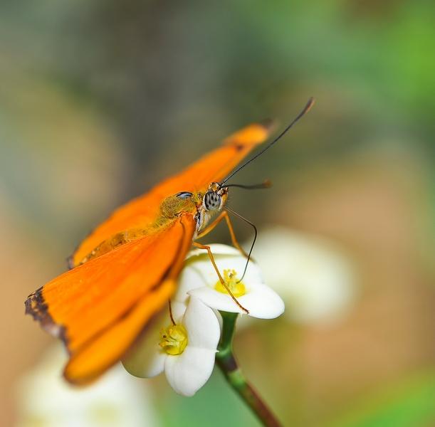 Sortie photo aux jardins des Papillons à Grevenmacher (L) 04 AVRIL 2009 - Les photos 389634COE_4330belux