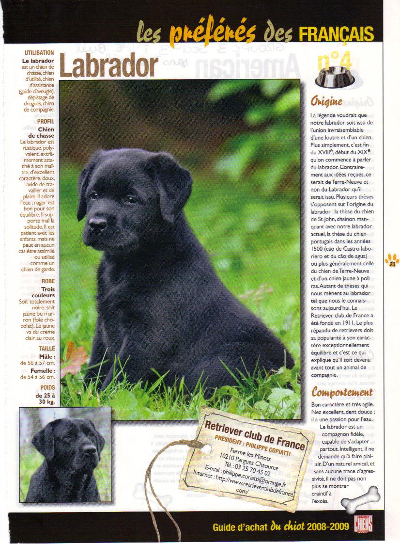 Labrador Retriever 3986927_02_2009_07_10_58