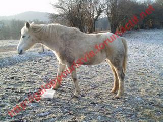 LASKA - ONC selle née en 1999 - adoptée en janvier 2010 par pitchoune63 432659laska_3