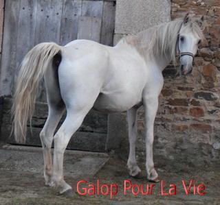 FOREVER (notre mascotte) - Connemara X SF né en 1994 - adopté en novembre 2009 par sophie-france 455955Fore3