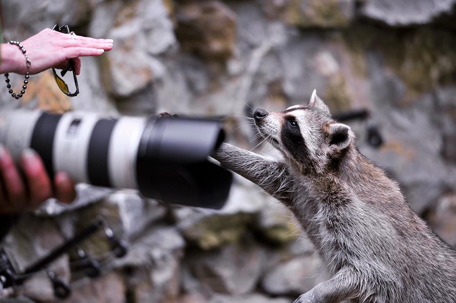Sortie Animaux au Zoo d'Olmen le 16 août - Les photos d'ambiances 475515PIE_2998belux