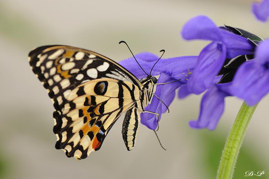 Sortie photo aux jardins des Papillons à Grevenmacher (L) 04 AVRIL 2009 - Les photos 495251Bel_Pap_1