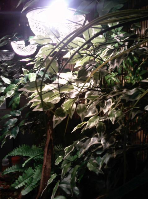 salle de reptiles 559164Photo1782