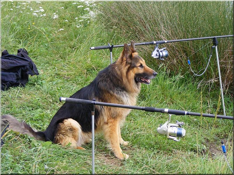 La tranquillité...la nature..et mon chien. 5940116