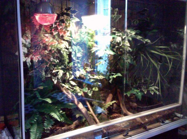 salle de reptiles 651054Photo1483