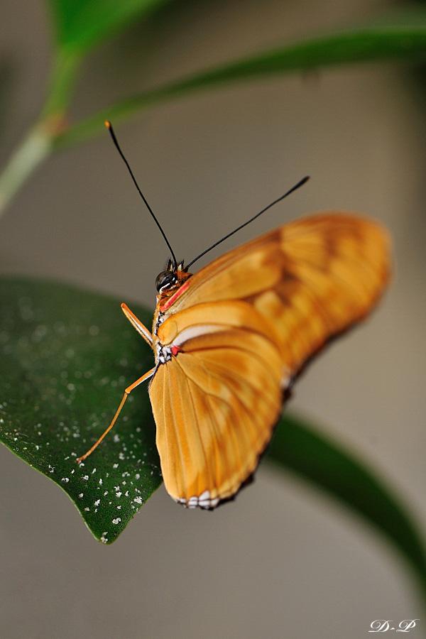 Sortie photo aux jardins des Papillons à Grevenmacher (L) 04 AVRIL 2009 - Les photos 778857Bel_Pap_88