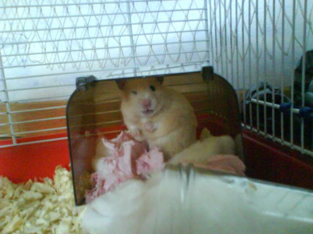 Apprivoisement du hamster 791084DSC03041