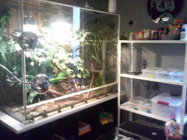 salle de reptiles 837519Photo1873