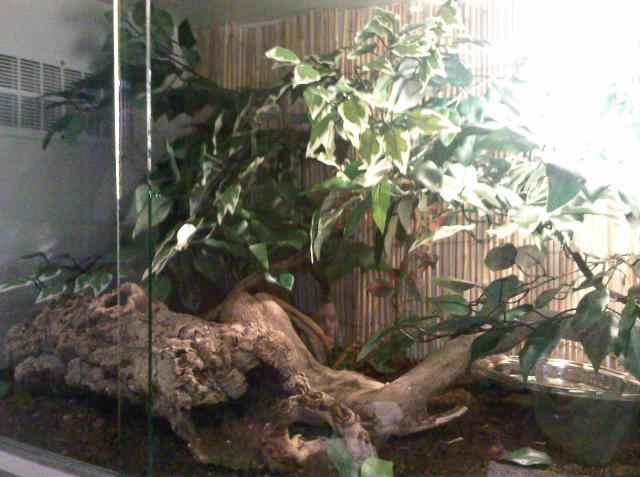 salle de reptiles 849075Photo1738