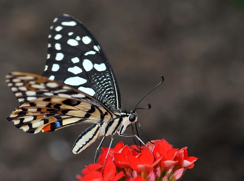 Sortie photo aux jardins des Papillons à Grevenmacher (L) 04 AVRIL 2009 - Les photos 849997COE_4334belux