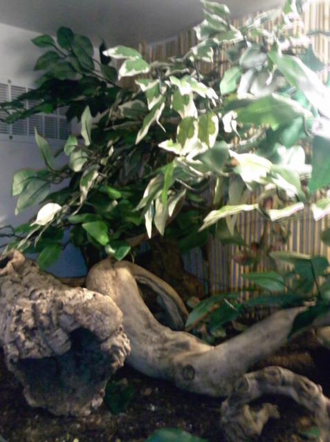 salle de reptiles 88871Photo1745