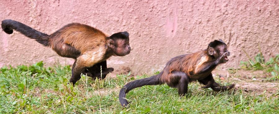 Sortie Animaux au Zoo d'Olmen le 16 août - Les photos 891629PIE_3040belux