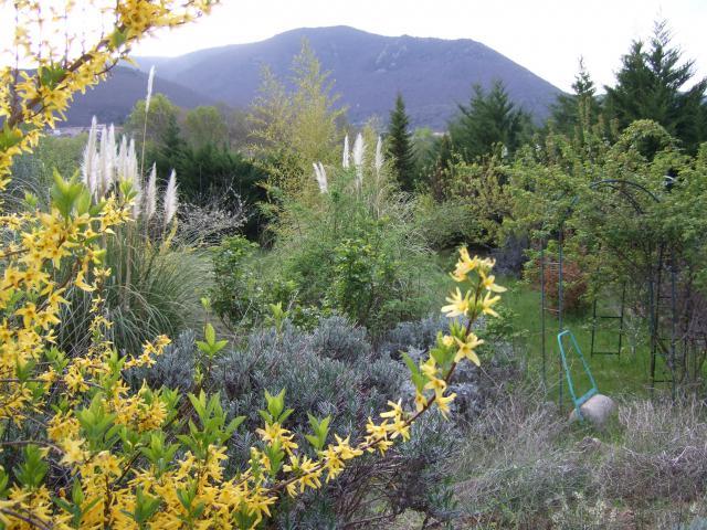 Mon jardin et moi... - Page 2 107012Printemps_2009_027