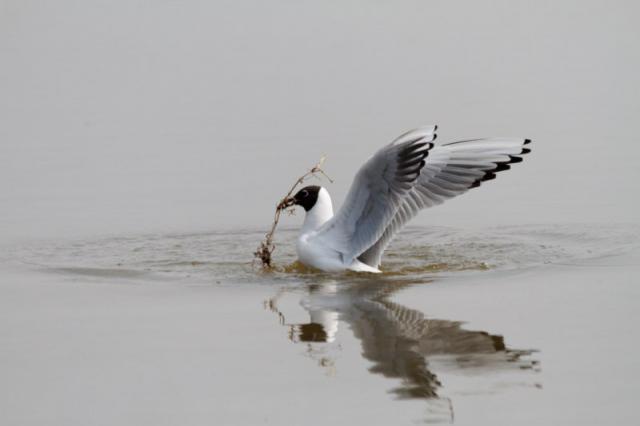 Parc ornithologique du Marquenterre 115290Marquenterre_Avril_2010_RAW_091_DxO_raw__800x600_