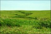 La prairie d'herbe