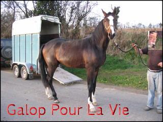 TROPIC - TF né en 2007 - adopté en décembre 2009 par ismeline 17266Tropic2