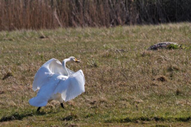 Parc ornithologique du Marquenterre 173363Marquenterre_Avril_2010_RAW_309_DxO_raw__800x600_