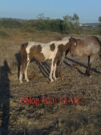 TIPI  - ONC poney né en 200 - adopté en septembre 2009 194981Tipi3