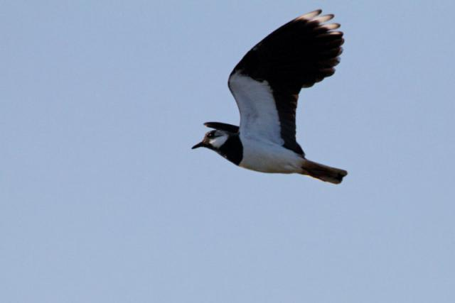 Parc ornithologique du Marquenterre 20119Marquenterre_Avril_2010_RAW_430_DxO_raw__800x600_