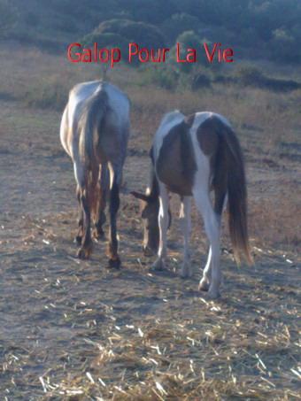 TIPI  - ONC poney né en 200 - adopté en septembre 2009 212002Tipi6