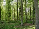 La forêt verdoyante