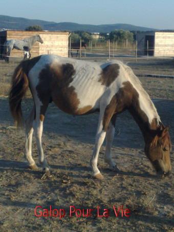 TIPI  - ONC poney né en 200 - adopté en septembre 2009 231026tipi1
