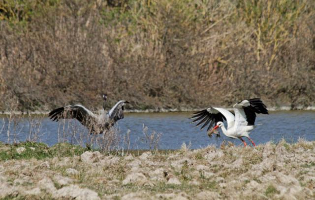 Parc ornithologique du Marquenterre 256172Marquenterre_Avril_2010_RAW_363_DxO_raw__800x600_