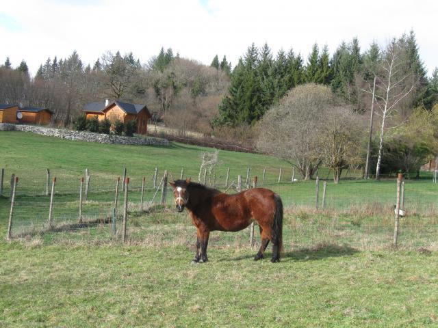 Etoile de liberté et Thérèse (2010) 323645IMG_0116