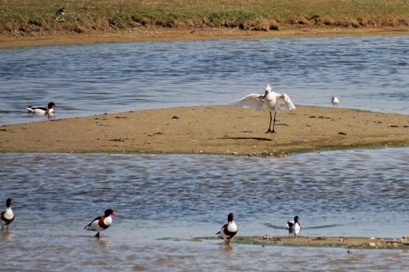 Parc ornithologique du Marquenterre 364578Marquenterre_Avril_2010_RAW_230_DxO_raw__800x600_