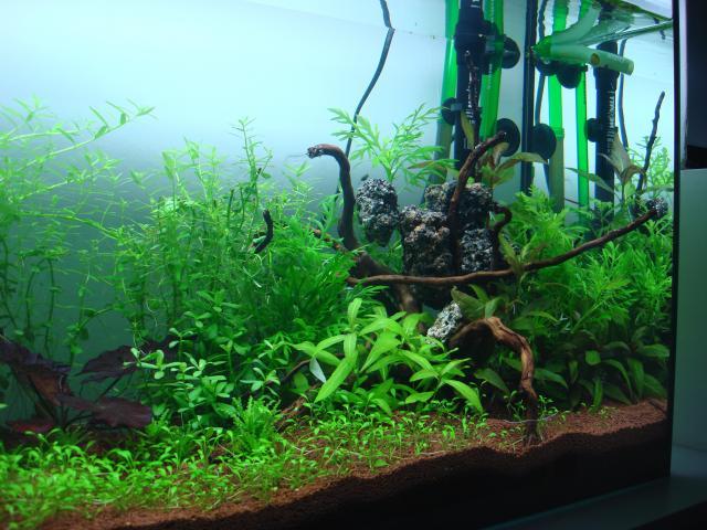 120 litres Planté 408517DSC08318
