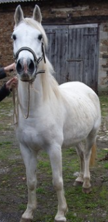FOREVER (notre mascotte) - Connemara X SF né en 1994 - adopté en novembre 2009 par sophie-france - Page 2 468405forever_1