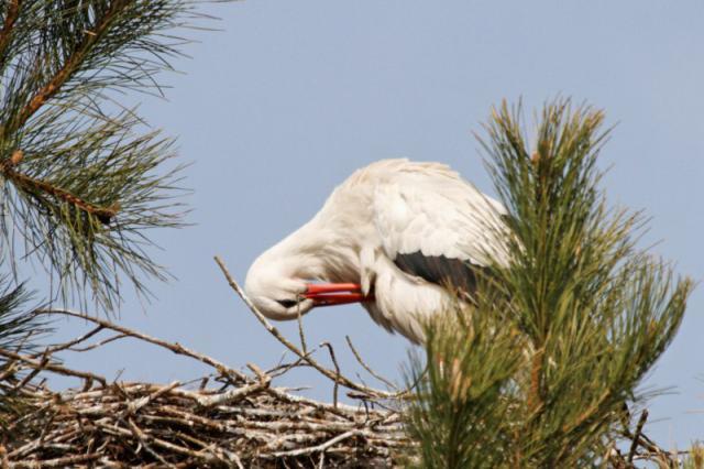 Parc ornithologique du Marquenterre 471010Marquenterre_Avril_2010_RAW_170_DxO_raw__800x600_