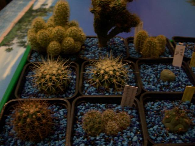 mes cactus 2010 526001100_2126