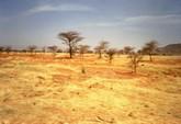 La savane sèche