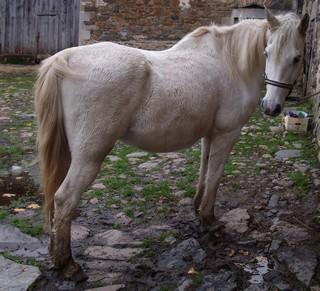 FOREVER (notre mascotte) - Connemara X SF né en 1994 - adopté en novembre 2009 par sophie-france - Page 2 539108photos_novembre_2009_157