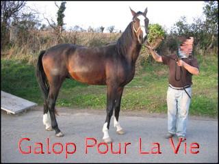 TROPIC - TF né en 2007 - adopté en décembre 2009 par ismeline 552856Tropic3