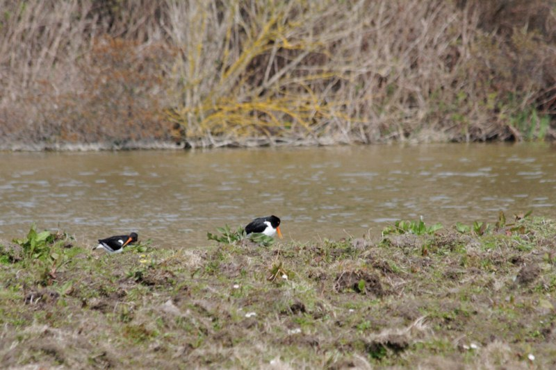 Parc ornithologique du Marquenterre 626806Marquenterre_Avril_2010_RAW_100_DxO_raw__800x600_