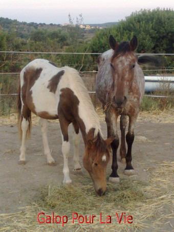 TIPI  - ONC poney né en 200 - adopté en septembre 2009 637669Tipi4