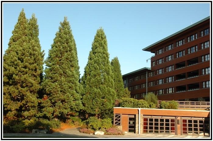 Disney's Sequoia lodges - Page 4 651430EDL0998