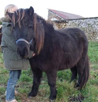 VENDREDI - Poney typé Shetland né en 2009 - adopté en février 2010 par oramai-di-maggio 655989vinus4