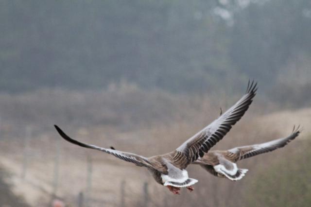 Parc ornithologique du Marquenterre 706637Marquenterre_Avril_2010_RAW_006_DxO_raw__800x600_