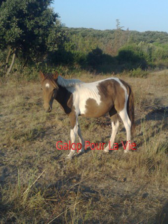 TIPI  - ONC poney né en 200 - adopté en septembre 2009 732824Tipi2