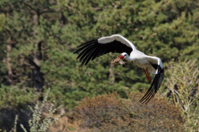 Parc ornithologique du Marquenterre 737758Marquenterre_Avril_2010_RAW_368_DxO_raw__800x600_