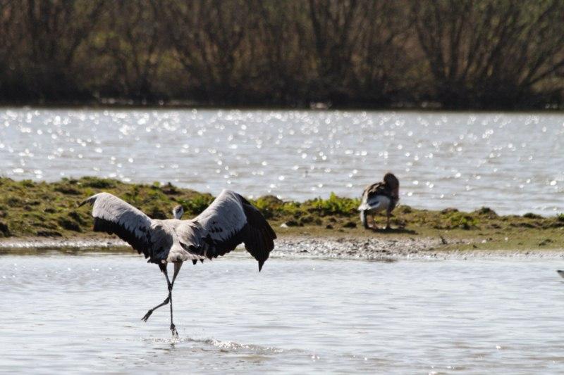 Parc ornithologique du Marquenterre 779919Marquenterre_Avril_2010_RAW_252_DxO_raw__800x600_