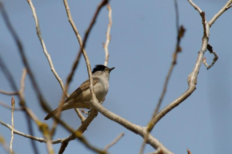 Parc ornithologique du Marquenterre 788452Marquenterre_Avril_2010_RAW_030_DxO_raw__800x600_