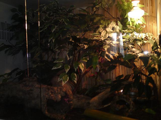 salle de reptiles 804919DSC00021