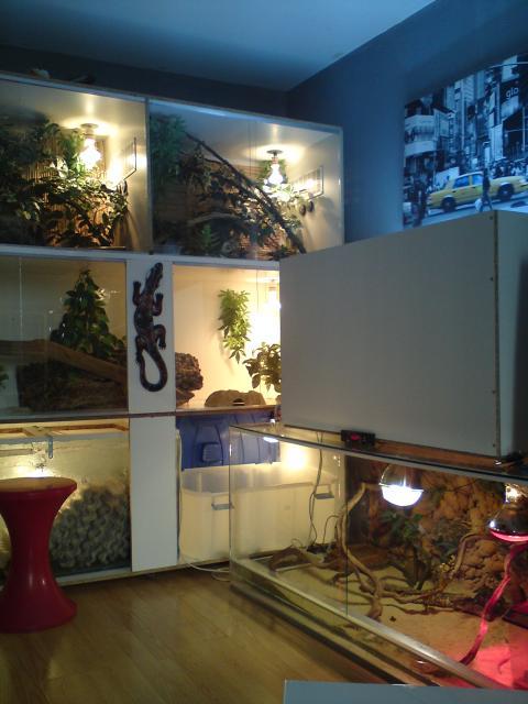 salle de reptiles 825446DSC00080