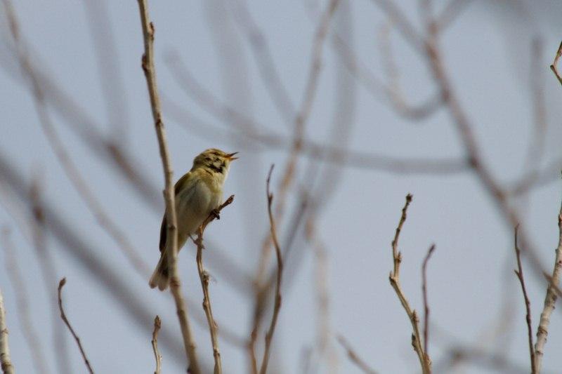 Parc ornithologique du Marquenterre 839730Marquenterre_Avril_2010_RAW_137_DxO_raw__800x600_