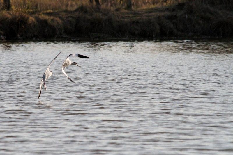Parc ornithologique du Marquenterre 846839Marquenterre_Avril_2010_RAW_439_DxO_raw__800x600_